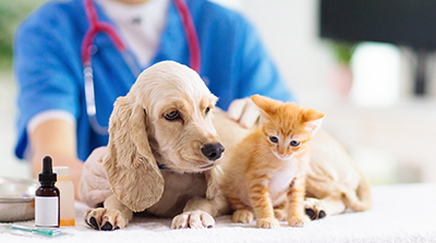 Covenant Animal Clinic Online Pharmacy
